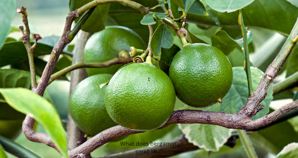 What does bergamot smell like?
